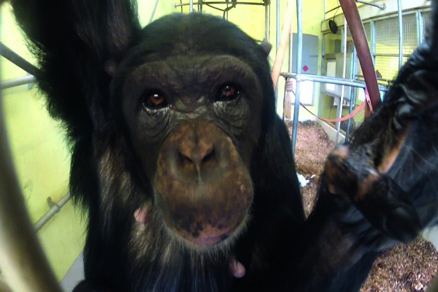 /db_data/movies/hetchimpanseecomplex/scen/l/chimp_2b_1.jpg